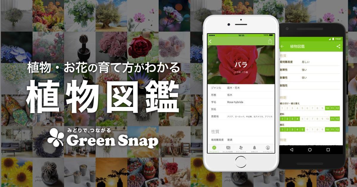 GreenSnap_zukan.jpg